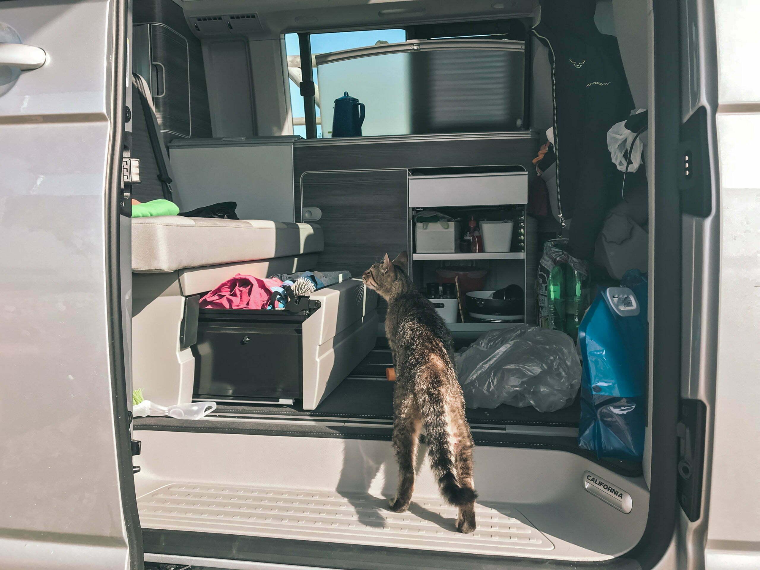Die Campingplatz Katze durchsucht einen unaufgeräumten Camper